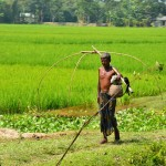 Ruler – Rural : ไม้บรรทัด ชนบท