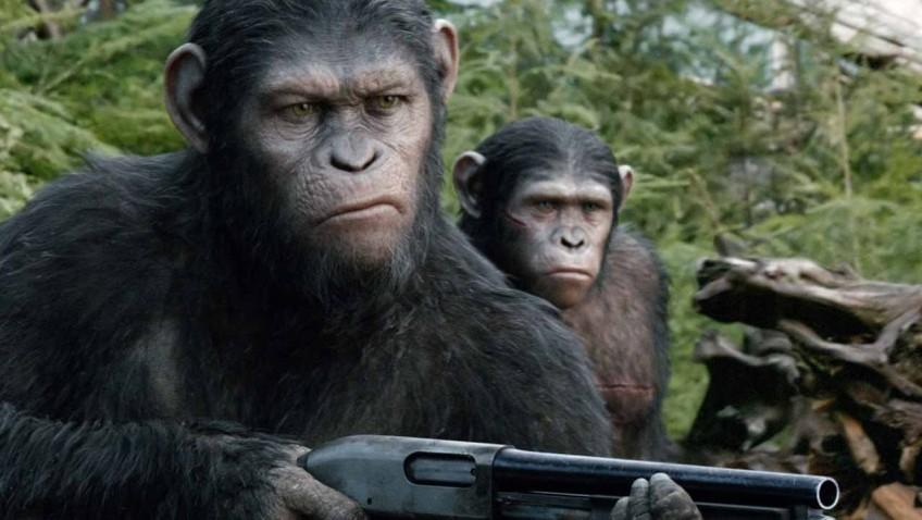 Monkey – Ape : ลิง – วานร  ต่างกันอย่างไร?