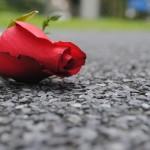 Rose – Road : ถนนสายกุหลาบ
