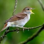 Birth – Bird :  เกิดเป็นนก