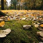 Leave –  Leaf : ใบไม้ที่จากไป