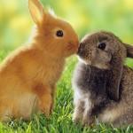 Rabbit – Rubbish :  กระต่าย ขยะ