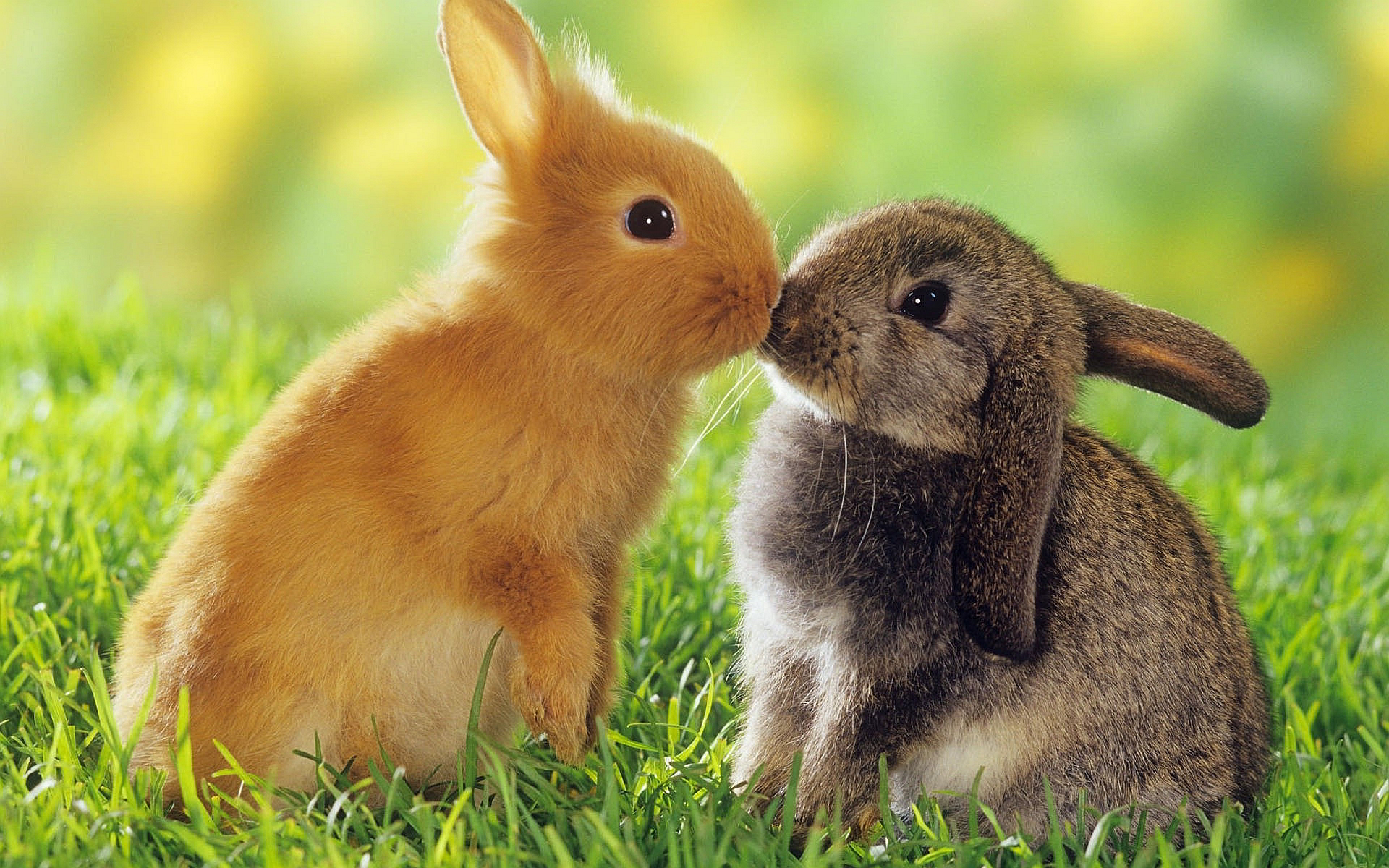 ที่มา: Credit Pic : wallpaperu.com/wp-content/uploads/2015/03/rabbit_kissing_wallpaper.jpg