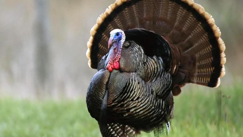 Turkey คืออะไรกันแน่?