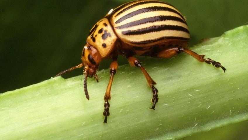 เรียนภาษาอังกฤษฟรี | Insect Insert ต่างกันอย่างไร