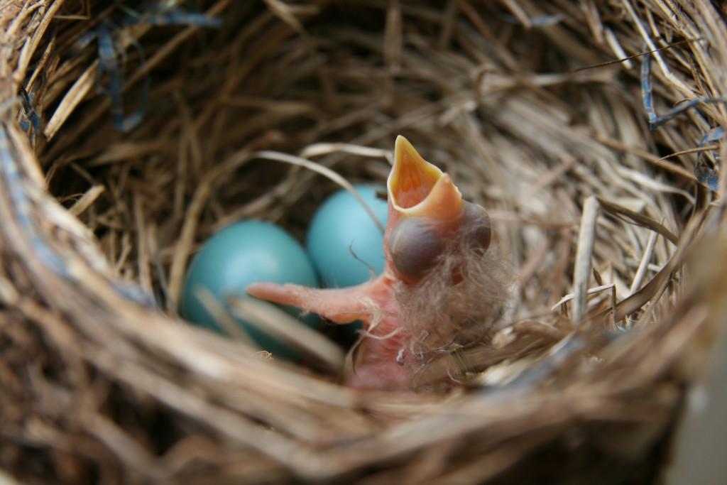 ความแตกต่าง Nest Net