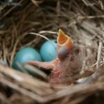 เรียนภาษาอังกฤษฟรี | Nest – Net ต่างกันอย่างไร