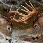 Buck – Bug ต่างกันอย่างไร