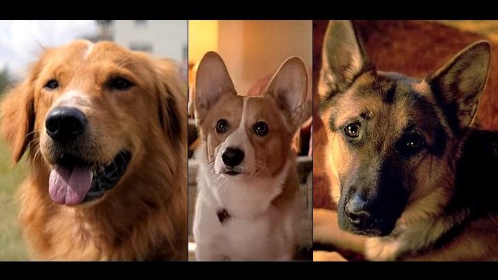 รีวิวหนัง  A Dog's Purpose หมา เป้าหมายและเด็กชายของผม| เรื่องย่อ  Dog's Purpose หมา เป้าหมายและเด็กชายของผม| รีวิวหนัง กับ อาจารย์บอม