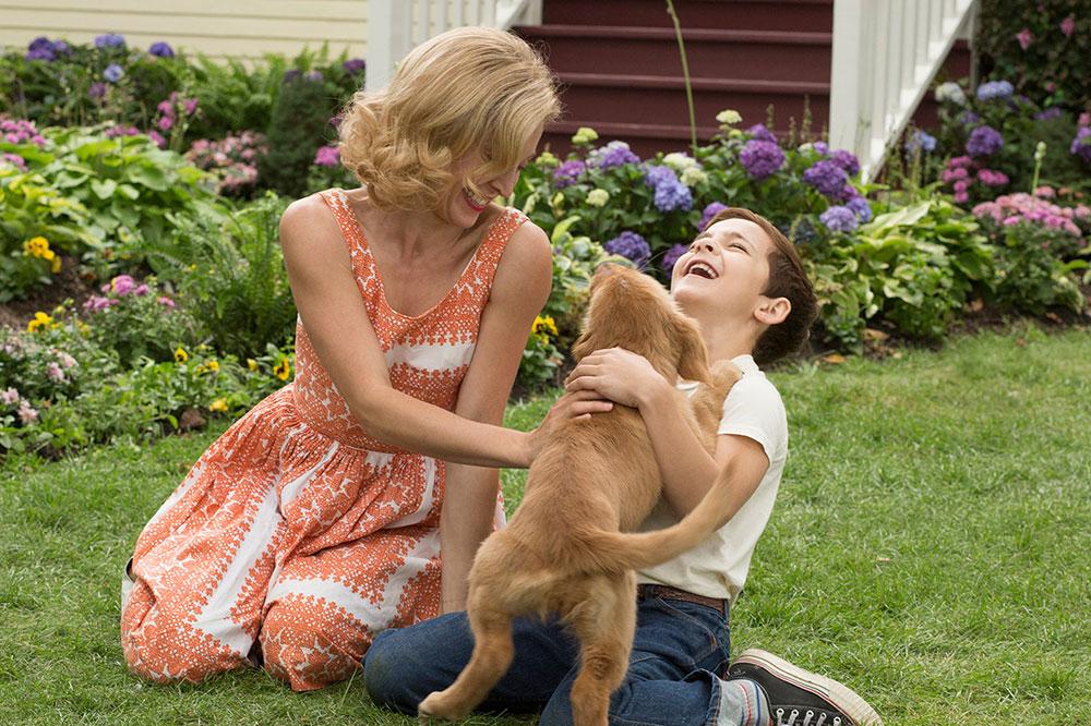 เรื่องย่อ A Dog's Purpose หมา เป้าหมายและเด็กชายของผม| เรื่องย่อ  Dog's Purpose หมา เป้าหมายและเด็กชายของผม| รีวิวหนัง กับ อาจารย์บอม
