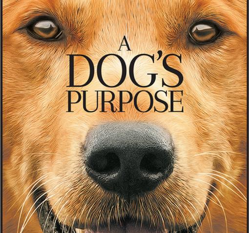 รีวิวหนัง A Dog's Purpose หมา เป้าหมายและเด็กชายของผม