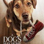 รีวิวหนัง A Dog's  way home เพื่อนรักผจญภัยสี่ร้อยไมล์